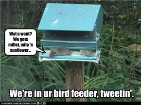 We're in ur bird feeder, tweetin'.