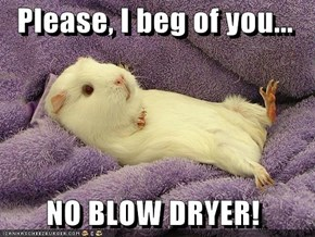 Please, I beg of you...    NO BLOW DRYER!