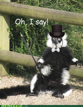 The Fancy Schmancy Lemur