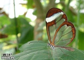 Transparent butterfly win