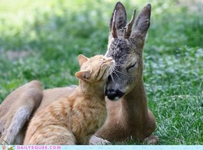 Interspecies Love: Fawning for Affection