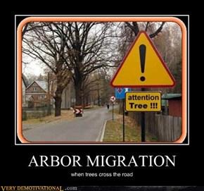 ARBOR MIGRATION