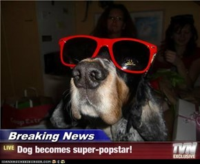 Breaking News - Dog becomes super-popstar!
