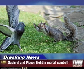 Breaking News -  Squirrel and Pigeon fight in mortal combat!