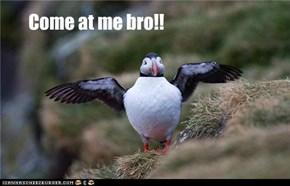Come at me bro!!