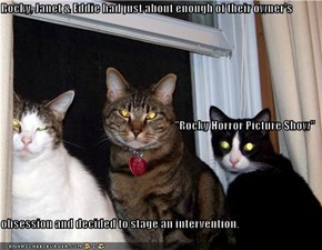 "Rocky, Janet & Eddie had just about enough of their owner's ""Rocky Horror Picture Show"" obsession and decided to stage an intervention."