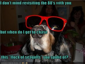 """I don't mind revisiting the 80's with you, but when do I get to chase  this """"flock of seagulls"""" you spoke of?"""