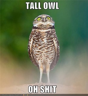 TALL OWL  OH SHIT