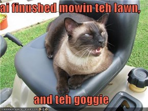 ai finushed mowin teh lawn,  and teh goggie