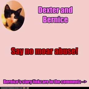Dexter watches over annuder kitteh as she getz better...