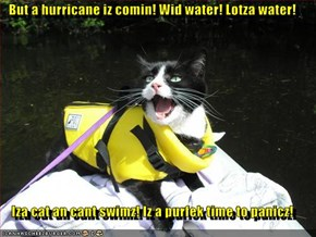 But a hurricane iz comin! Wid water! Lotza water!  Iza cat an cant swimz! Iz a purfek time to panicz!