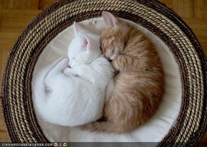 Cyoot Kittehs of teh Day: Little Spoon, Big Spoon