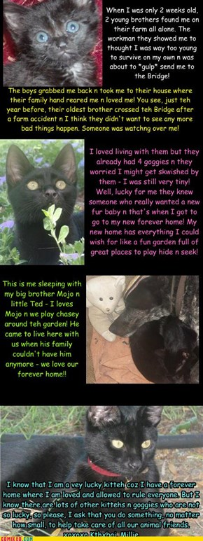 Millie's Lucky Rescue Story...