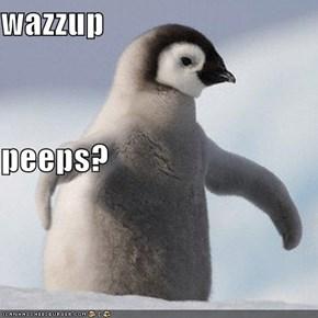 wazzup peeps?