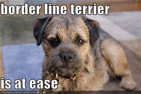 border line terrier  is at ease