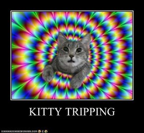 KITTY TRIPPING