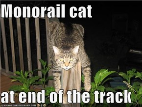 Monorail cat  at end of the track