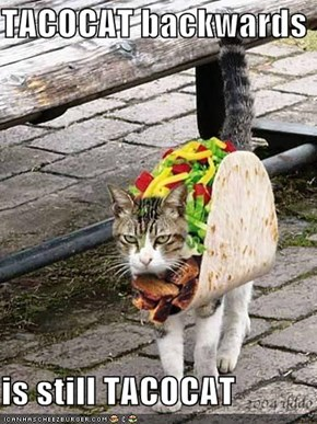 TACOCAT backwards  is still TACOCAT