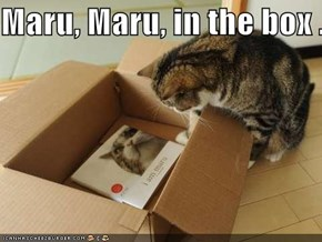 Maru, Maru, in the box ...