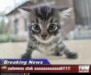 Breaking News - cuteness atak aaaaaaaaaaaah!!1!!