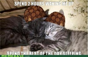 Scumbag Cats: Just Another 10 Minutes!