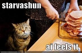 starvashun   ai feels it