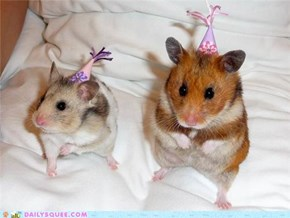 Getting Ready For A Hamster Party!