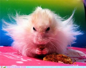 Little Hamster Is Angry
