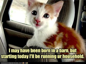 I may have been born in a barn, but starting today I'll be running ur household.
