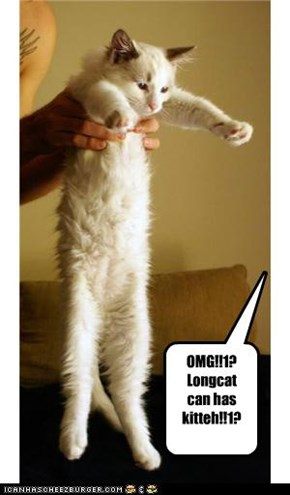 Awwww.... Baybee Longcat
