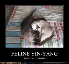 FELINE YIN-YANG