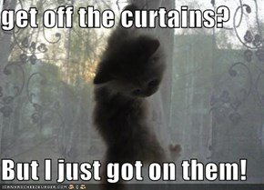 get off the curtains?  But I just got on them!
