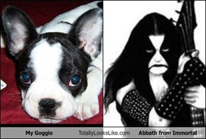 My Goggie Totally Looks Like Abbath from Immortal