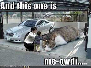 And this one is  me-owdi.....
