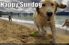 Happy Sundog