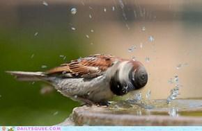 Acting Like Animals: Drillbit Birdie