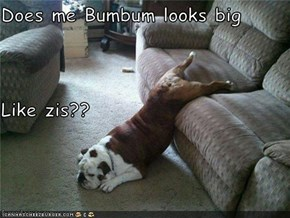 Does me Bumbum looks big  Like zis??