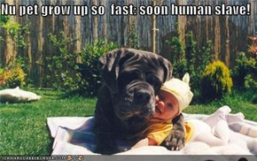 Nu pet grow up so  fast: soon human slave!