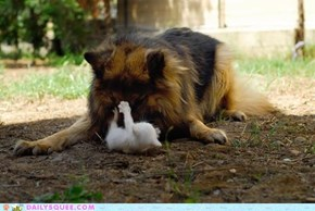 Interspecies Love: Play Time is Over... OR IS IT??