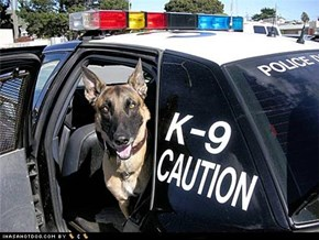 Goggie ob teh Week - Police & Safety Dogs: K-9 Captain!