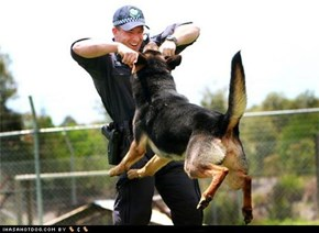 Goggie ob teh Week - Police & Safety Dogs: Practice Makes Perfect