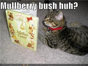 Mullberry bush huh?