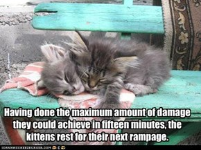 Having done the maximum amount of damage they could achieve in fifteen minutes, the kittens rest for their next rampage.