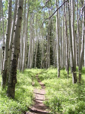 Aspen Trail, White River National Forest, Colorado
