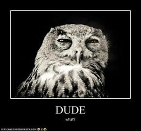 JUST SAY NO, OWL!  JUST SAY NO!