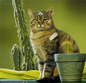 20 Pictures of Cats with Cacti