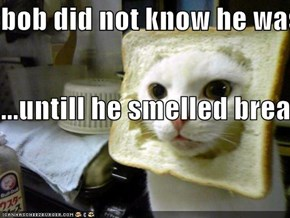 bob did not know he was caught eating his owners sandwitch ...untill he smelled bread
