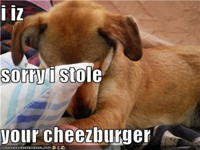 i iz  sorry i stole your cheezburger