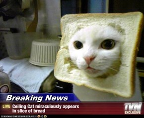 Breaking News - Ceiling Cat miraculously appears in slice of bread