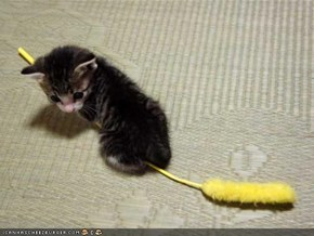 Cyoot Kitteh of teh Day: Witch Kitteh Needs a New Broom